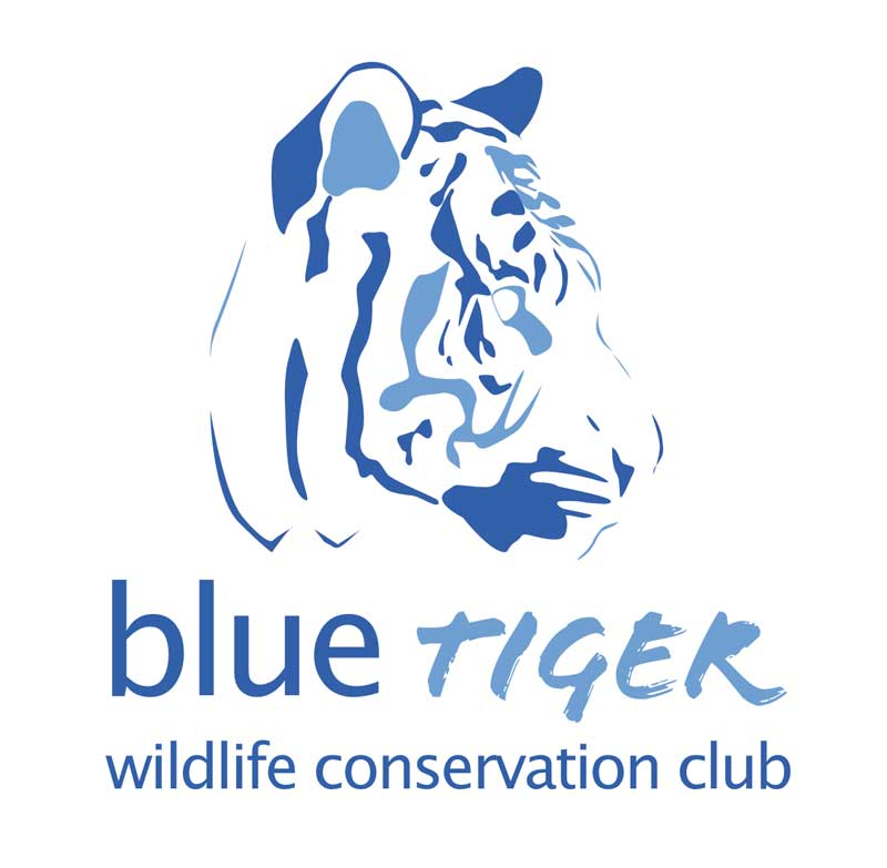 blue tiger club logo
